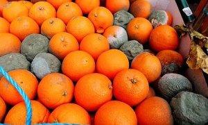 oranges10a